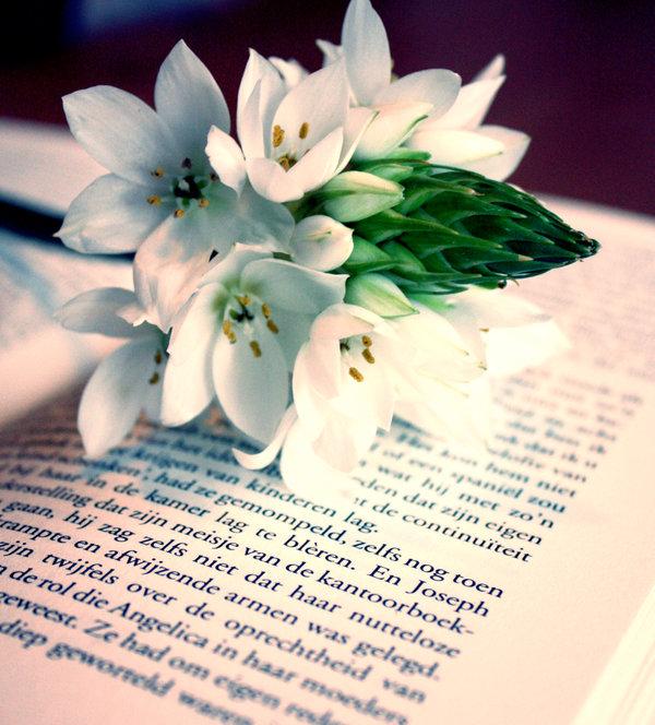 flower_book_by_zoewiezo