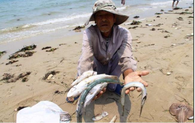 Nghị luận xã hội về môi trường qua hiện tượng cá chết