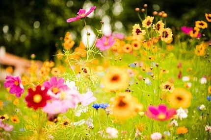 Cảnh sắc thiên nhiên tươi đẹp trong bài thơ Vội vàng