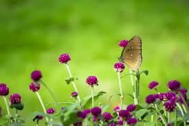 Ước muốn được hòa mình vào thiên nhiên tươi đẹp