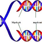 Cấu tạo và chức năng của ADN và gen